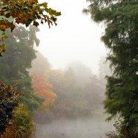 Туман :: Lina Kurbanovsky