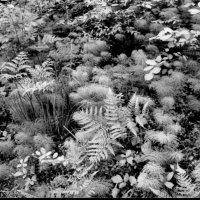 травы :: юрий кухоронок