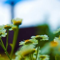 plants :: Наталья Козырева