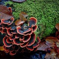 Плитвице, грибы :: Михаил Дрейке