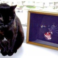 На фото не я-я добрая !!! :: михаил кибирев