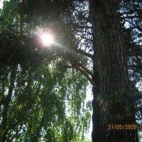 солнце :: Наталья Савич