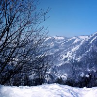 зима :: Елена Полякова