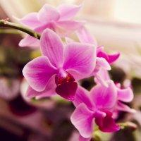 орхидея :: Ильнар Алтынбаев