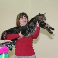 Выставка  кошек  3.03.2012 :: Андрей Юзеев