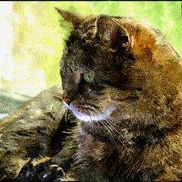 Мой котик . :: ALISA LISA