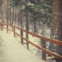 Снег :: Александр Иванов