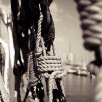 Bonds of  Safety :: Eva Langue