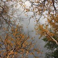Уж небо осенью дышало... :: Margarita Shrayner