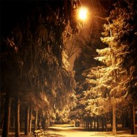 Ночной парк :: Павел Карпов