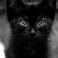 cat :: Наталья Козырева