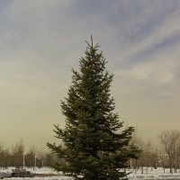 Ох уж эти елки!!! :: Oleg Sadyrtinov