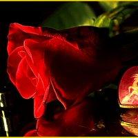 Красная роза на память . :: ALISA LISA