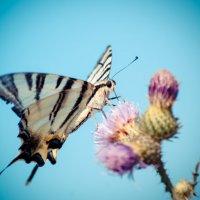 бабочка :: Андрей Липов