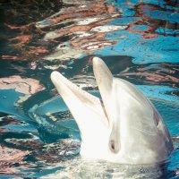 дельфин :: Андрей Липов