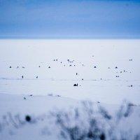 Посоны на льду :: Vladimir B