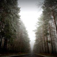 Лес :: Артем Анохин