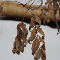 зима или весна? :: Альбина Еликова