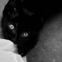 kitty#2 :: Наталья Козырева