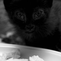 kitty#1 :: Наталья Козырева