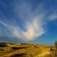 dead dunes :: linas būdavas
