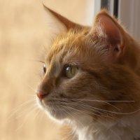И снова - кошка на окошке) :: vik zhavoronka
