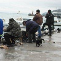 Февральская рыбалка в Ялте. :: Марина Титова