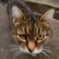 кошка Муська :: Александр Лонский