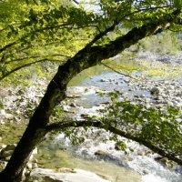 Горная река до разлива :: Александр Леонов