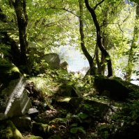 Река из тени леса :: Александр Леонов