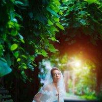 Портрет невесты :: Максим Орлов