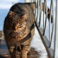 Мартовский кот... :: Ксюша Куллонен