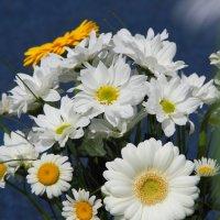 Цветы :: Weskym Markova