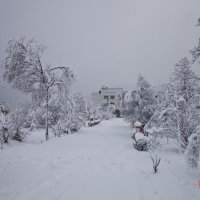 Зимнее утро :: Андрей Асеев