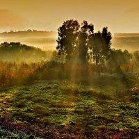 Утро :: Lev Tovbin