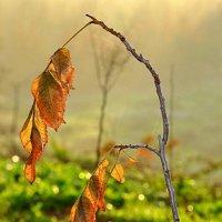 Осень наступает :: Lev Tovbin