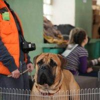 Выставка собак  10.03.2012 :: Андрей Юзеев