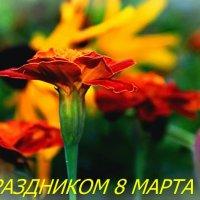 Цветы в подарок ! :: ALISA LISA