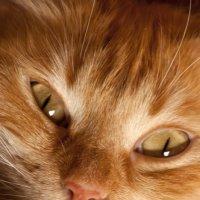 Милая рыжая морда :: vik zhavoronka