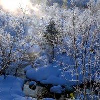 зимний туман :: вадим измайлов