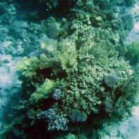 подводные цветы :: Александр Литовченко
