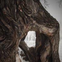 дерево :: Александр Иванов