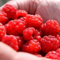 ягоды :: Марина Попова