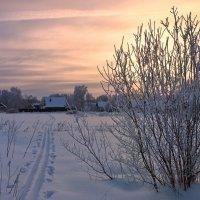 Морозное утро :: Николай Белавин