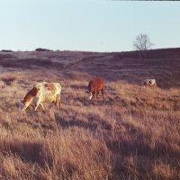 Челябинские молокозоводы :: Катька Zenitчица