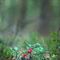 в лесу :: Ольга Нечипорук