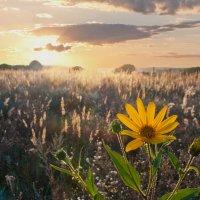 Солнечный цветок :: Диана Задворкина