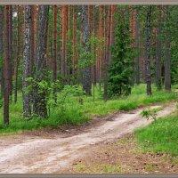 Лесная дорога... :: Андрей Медведев