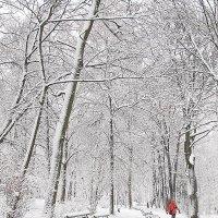 Зимний парк :: john dow