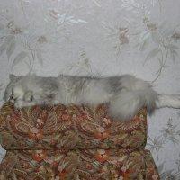 Кошка Мэри :: Сергей Аленевский